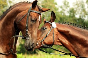 Pet & Equestrian - Talk to us about insuring your pets we have access to the niche insurers in this market and this means you can again have the best but still deal with your local broker